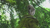 fascicularis : Monkey sits on the sculpture. Crab eating macaque, Bali, Indonesia