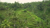 plantation : Tegalalang rice terraces. Rice field, Bali, Indonesia