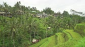 mudas : Buildings on the rice terrace. Tegalalang rice terraces - October 2017: Ubud, Bali, Indonesia