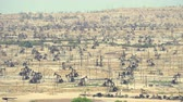 ham : Thousands of pumpjack pumping in oil field, Bakersfield, California  - August 2017: Bakersfield, California, US