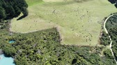 economia rural : aerial of herd of cows grazing on pasture - New Zealand