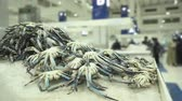 торговля : Fresh crabs and seafood in the fish market - Dubai
