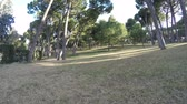 proximidade : Movement through the park on a sunny day the trees are very low to the yellowed grass Stock Footage