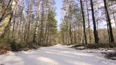 snowwhite : Shot snowy forest trees in the winter Stock Footage