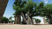 саванна : Awesome baobabs in African savannah