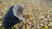yellow : Woman hand pick up gather colorful maple tree leaves in Verkiai park.