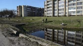 male animal : two fishermen with rods runs along the creek near block of flats on spring Stock Footage