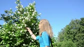 syringa : girl woman in blue sweater pick jasmin syringa bush white blooms on background of blue sky in summer.