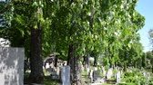 smell : birch tree branches and leaves move in wind in rural graveyard cemetery and lot of monuments grave tomb stones between them. Death smell.