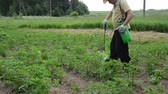 colorado potato beetle : young farmer with a green spray spraying potato from the colorado  beetle weed Stock Footage