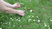 lifestyle : Woman hands pick small daisy flowers from lawn. Stock Footage