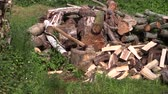 koçan : zoom out of axe stuck to stump near to large pile of firewood and  woodshed