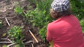handheld : woman with hat and glove work in vegetable garden. Weed strawberry. Handheld. Full HD 1080p. Progressive scan 25fps.
