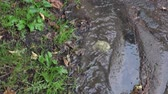 водянистый : Water stream flow down hill in rainy autumn day. Tilt up shot. 4K