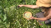 herb : Female woman with wicker hat pick camomile herbal flower blooms to wooden dish in summer garden. Alternative medicine. Herbalist girl. Zoom in shot. 4K Stock Footage