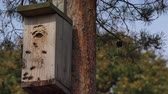 hornets : entrance hornets nest of wasps in bird nesting box. Static closeup shot. 4K