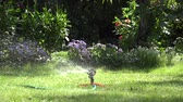 waterhose : Gardener man guy plug water hose to special watering equipment tool sprinkler and water starts to spray on flowers and lawn in summertime garden. Static shot. 4K