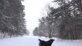 дворняжка : Funny dog in heavy snow fall in winter park. Static shot. 4K