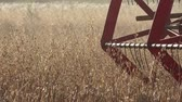 winnowing : Closeup of agricultural combine machine with reel and cutter bar threshing oats. Panorama. 4K Stock Footage