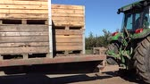 carry out : BIRZAI, LITHUANIA - OCTOBER 03, 2015: Tractors load wooden crates full of harvested apple fruit on huge trailer in autumn orchard on October 03, 2015 in Birzai, Lithuania. Static shot. 4K Stock Footage