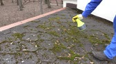 telha : worker hands spray moss with chemicals on roof tiling. Static closeup shot.