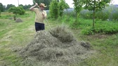 laborious : Fat farmer man rake dry grass hay. 4K