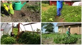 pesticide : Ecologic gardening in rural farm. Footage collage.