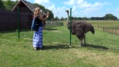 struś : Woman holding toddler girl on hands near fenced ostrich bird in zoo Wideo