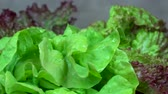 counterclockwise : Organic lettuce leaves. Healthy nutrition. anticlockwise turntable Stock Footage