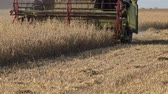 winnowing : Harvesting agricultural combine machine with reel and cutter bar is threshing oats on farmland. 4K