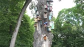 colorful bird houses nesting-box hang old dead tree trunk in park. 4K Wideo