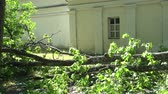 Huge tree branch fallen on residential house fence after storm. Wideo