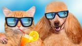 cat strofe : Cinemagraph - Cat and dog wearing sunglasses relaxing in the sea background. Red cat drinks lemonade. Motion Photo.