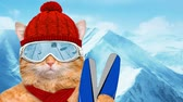 cat strofe : Cinemagraph - Skier cat wearing sunglasses relaxing in the mountain. Motion Photo. Stock Footage