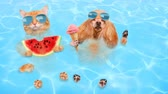 cat strofe : Cinemagraph - Cat and dog wearing sunglasses relaxing in the sea. Red cat eats watermelon and dog eats ice cream. Motion Photo. Stock Footage