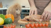 preparation : Cinemagraph - Man with dog cooking meat in the kitchen. Motion Photo. Stock Footage
