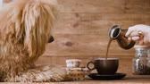 poodle : Pouring coffee into a cup. Dog looking on the cup. Stock Footage