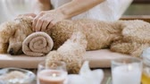 símbolos : Woman giving body massage to a dog. Spa still life with aromatic candles, flowers and towel.