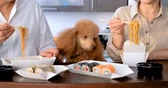 pauzinho : Cinemagraph- Couple with their dog enjoy japanese thai meal.