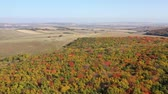 Aerial view of idyllic golden forest, rural landscape Стоковые видеозаписи