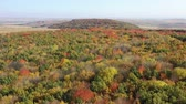 Top view of foliage tree forest during vibrant colors of autumn. Стоковые видеозаписи