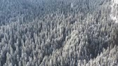 snow covered spruce : Aerial view of forest in winter: Frozen trees and snow covered evergreen forest.