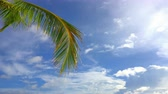 Palm tree leaf over blue sunny tropical sky in dominican republic at summer morning Стоковые видеозаписи