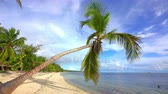 Palm tree on beautiful ocean beach in dominican republic at sunny morning Стоковые видеозаписи