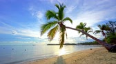 Palm trees on tropical ocean beach in dominican republic at sunny morning