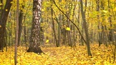 Leaf fall in the bright autumn park Стоковые видеозаписи