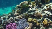feeding fish aquarium : Underwater coral reef with tropical fish