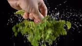 bundle of : falling drops of water while shaking off a leaf of parsley