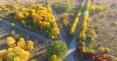 Aerial view to alley with yellow trees in autumn park