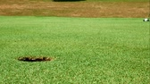 погружение : Close up shot of golf putt on beautiful golf course - ball barely misses hole in green